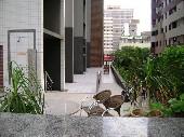 29) Jardim - Área Comum