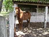 67) Cavalo (detalhe)