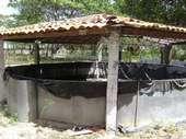 75) Tanque de Peixes
