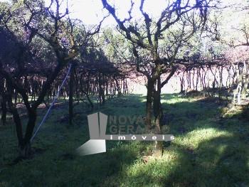 Chácara de 4 hectares, 12km de Caxias do Sul!