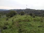 Campo para pecuária e reflorestamento.