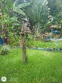 bistro edinho quintal fun