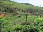 32 plantação de cebola
