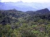 floresta-atlantica