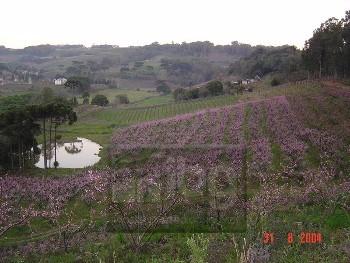 Área própria para cultivo de vinhedos