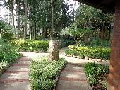 Bosque Real-Bosque