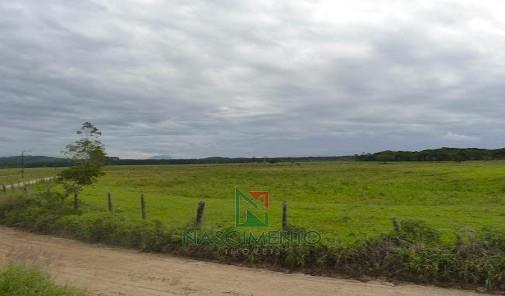 Fazenda  Itapiriú pasto