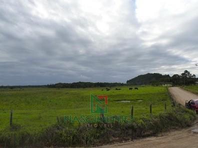 Fazenda  Itapiriu Pasto 2