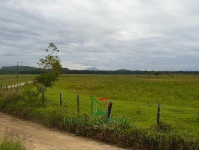 Fazenda Itapiriu - Pastag