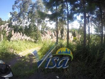 Terreno rodovia SC 301 brasília são bento do sul